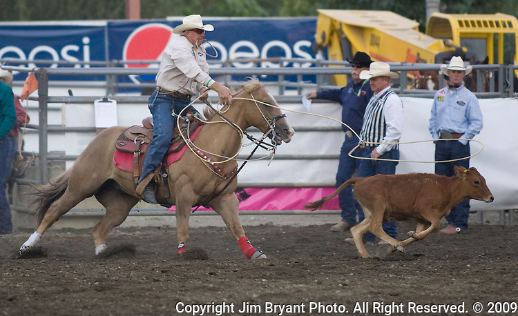Mike Johnson, from Henryetta, OK chases a calf during the Tie Down Roping at the Kitsap County Fair and Stampede  held Aug. 26 to Aug. 30, 2009 in Silverdale, WA.  Jim Bryant Photo. All Right Reserved. © 2009