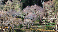 Winter deciduous trees, well pruned in Filoli Wall Garden