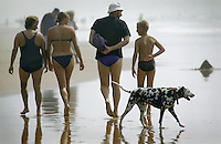 Dalmatian dog walking with a family on Sandy Mouth beach near Bude north Cornwall.