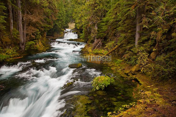 Rushing McKenzie River, Oregon
