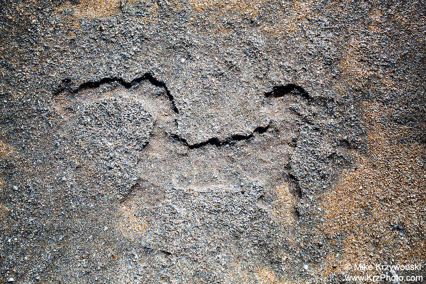 Hawaiian dog petroglyph  (normally under the sand) near the shoreline at Keiki Beach, North Shore, O'ahu.