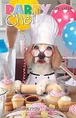 Samantha, ANIMALS,  photos,+dogs,++++,AUKPSP108,#A# Humor, lustig, divertido