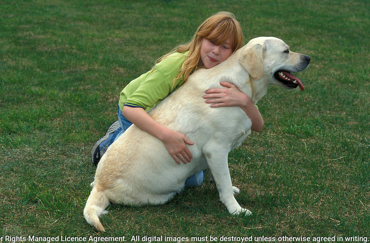 Young Girl outside cuddling Labrador Dog, 12 years old, pet, domestic, love, caring