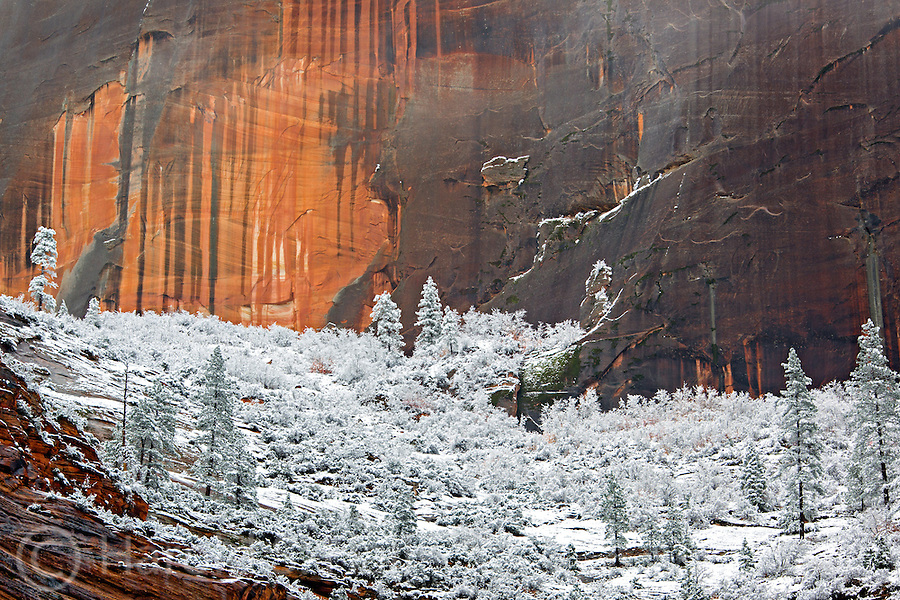 A vermillion colored cliff in Zion National Park is coated with a fresh coat of snow.