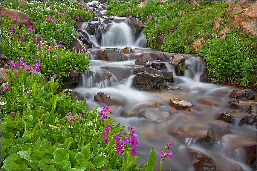 This Colorado Image was captured on top of Berthoud Pass in Grand County, Colorado. First Creek, as the guidebooks call it, offers many little wildflowers in the summer months that grow along its edges.