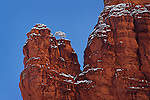 Snowy Juniper on Bell Rock, near Sedona, Arizona.  Available in sizes up to 30 x 45 inches.