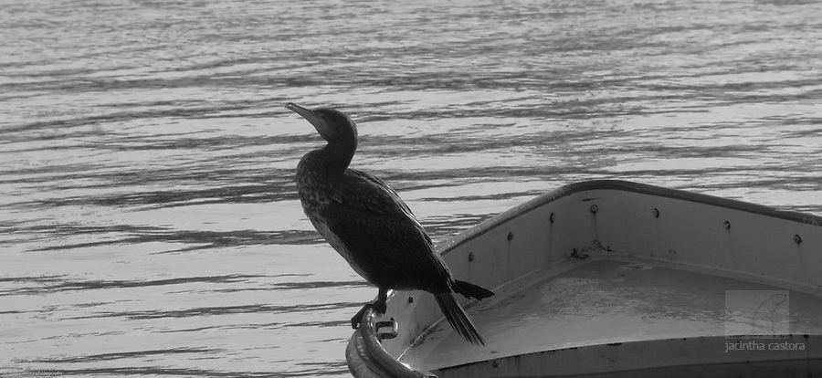 Cormorands on a boat that almost sunk in the Scheveningen Harbour after a huge storm