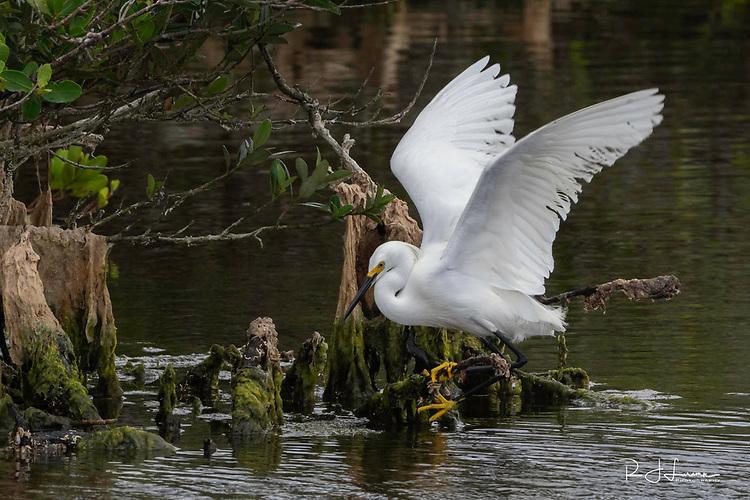 April 15-24, 2018 / Florida Trip to photograph Wildlife