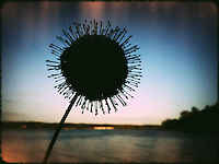 Strange flower silhouetted against blue sky and lake.