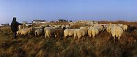Europe/France/Bretagne/29/Finistère/Ile d'Ouessant: Fête des moutons - Rabatteurs