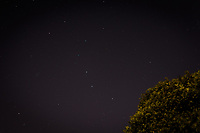The Big Dipper shares the frame with my neighbor's cumquat tree,  offering a here versus there perspective.