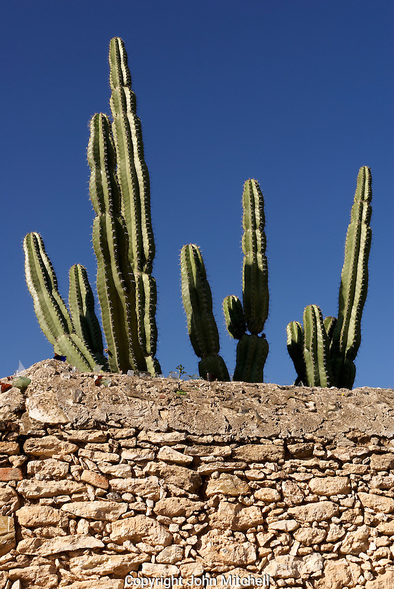 Organ cactus and stone wall  in the 19th century mining town of Mineral de Pozos, Guanajuato, Mexico.