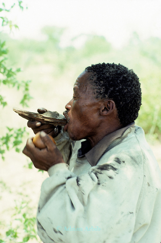 "A San Bushman drinking from a 'NO!"" fruit.  Traditionally the San have always been hunter gatherers but now are confined to farming and a more sedentary lifestyle.  Despite this their diet is still supplemented by gathered fruits, berries and tubers."
