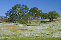 Valley Oaks, Fresno, CA