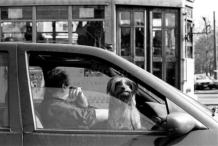 milano, un cane osserva dal finestrino di una macchina --- milan, a dog looks from the window of a car