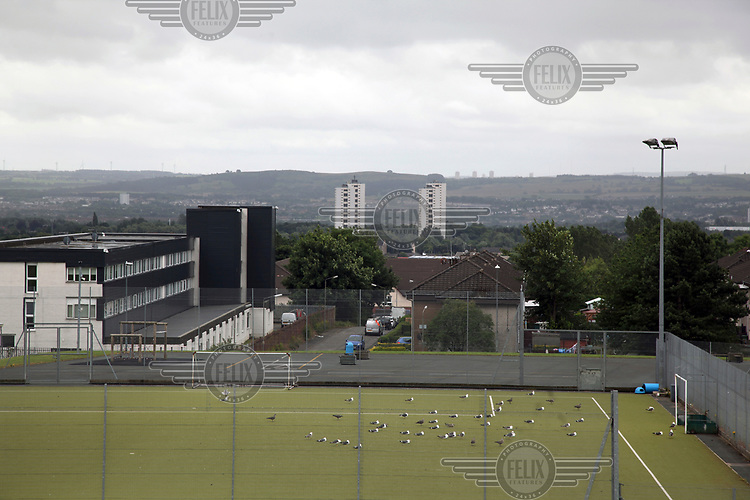 Seagulls on a 5-a-side football pitch.