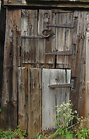 Weeds growing against od wooden shed door,with horse shoes nailed to wood.