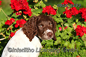 Bob, ANIMALS, REALISTISCHE TIERE, ANIMALES REALISTICOS, dogs, photos+++++,GBLA4283,#a#, EVERYDAY