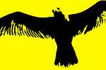 Yellow 11