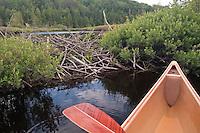 Canoe and beaver dam at Craig Lake State Park near Michigamme Michigan.