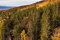 Russia, Sakhalin, Yuzhno-Sakhalinsk. Autumn forest at Gorny Vozdukh Ski center.