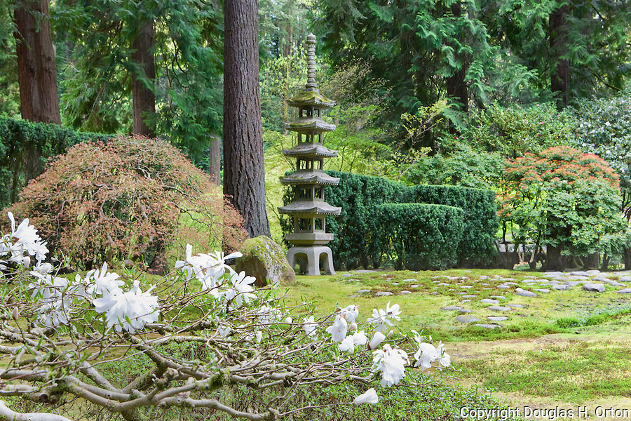 Blooming Magnolia and Pagoda, The Japanese Garden in Portland is a 5.5 acre respit.  Said to be one of the most authentic Japanese Garden's outside of Japan, the rolling terrain and water features symbolize both peace and strength. Public, city facility