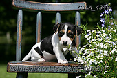 Bob, ANIMALS, REALISTISCHE TIERE, ANIMALES REALISTICOS, dogs, photos+++++,GBLA4349,#a#, EVERYDAY