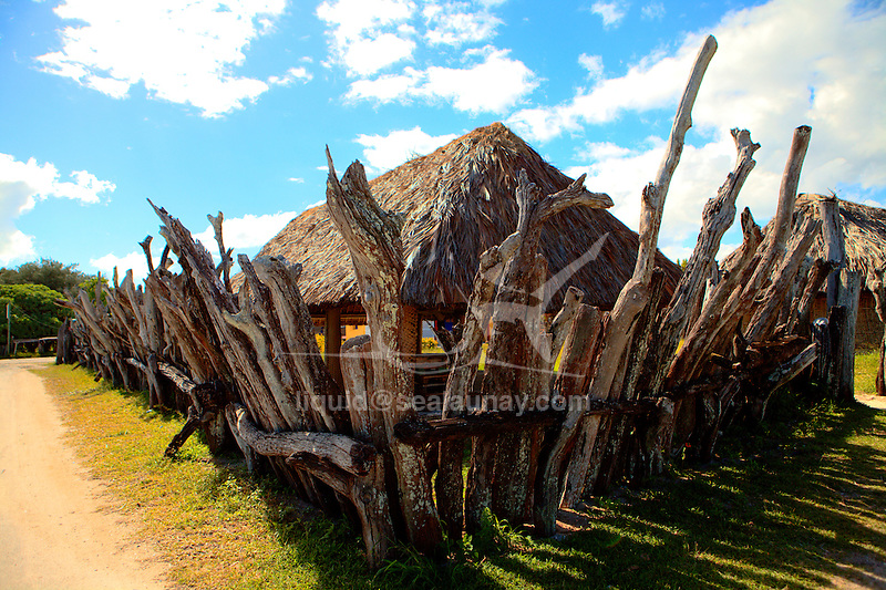 "The traditional circular thatched house with pointed roof still predominates on Ouvea, and the chiefly compounds are surrounded by high driftwood pallisades from the Eot tribe in the St Joseph villages  at Ouvéa Island in the Loyalty islands..Ouvéa (local pronunciation: [u?ve.a]) is a commune in the Loyalty Islands Province of New Caledonia, an overseas territory of France in the Pacific Ocean. The settlement of Fayaoué [fa?jawe], on Ouvéa Island, is the administrative centre of the commune of Ouvéa..Ouvéa is made up of Ouvéa Island, the smaller Mouli Island and Faiava Island, and several islets around these three islands. All these lie among the Loyalty Islands, to the northeast of New Caledonia's mainland..Ouvéa Island is one of the Loyalty Islands, in the archipelago of New Caledonia, an overseas territory of France in the Pacific Ocean. The island is part of the commune (municipality) of Ouvéa, in the Islands Province of New Caledonia..The crescent-shaped island, which belongs to a larger atoll, is 50 km (30 miles) long and 7 km (4.5 miles) wide. It lies northeast of Grande Terre, New Caledonia's mainland..Ouvéa is home to around 3,000 people that are organized into tribes divided into Polenesian, Melanesian and Walisian by ethnic descend. The Iaai language is spoken on the island..The two native languages of Ouvéa are the Melanesian Iaai and the Polynesian Faga Uvea, which is the only Polynesian language that has taken root in New Caledonia. Speakers of Faga Uvea have fully integrated into the Kanak society, and consider themselves Kanak..Ouvéa has rich marine resources and is home to many sea turtles, species of fish, coral as well as a native parrot, the Uvea Parakeet, that can only be found on the island of Ouvéa..A large crustacaen called a ""coconut crab"" or crabe de cocotier can also be found on the islands. The large crabs live in palm tree plantations and live solely on a diet of coconuts that they crack open with their powerful claws. They are blue in c"