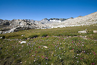 Alpin Meadow in Upper Evolution Basin
