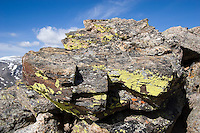Lichens on rock at 12,110 feet elevation, Rock Cut, Rocky Mountain National Park, Colorado