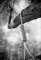Rope noose hanging from tree branch<br />