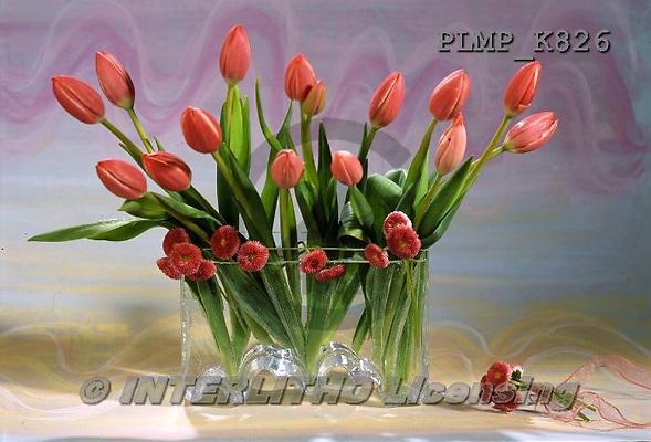 Marek, FLOWERS, BLUMEN, FLORES, photos+++++,PLMPK826,#f#