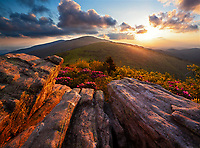 Rhododendron bloom at sunset, Jane Bald, Roan Highlands