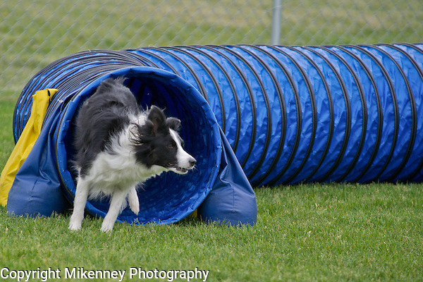 CPE Agility Trial June 2014 at Boomtowne Canine Campus