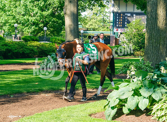 Genre before The Obeah Stakes at Delaware Park on 6/11/16