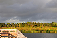 Late afternoon storm clouds approaching Green Cay Wetlands, Boynton Beach, Florida.