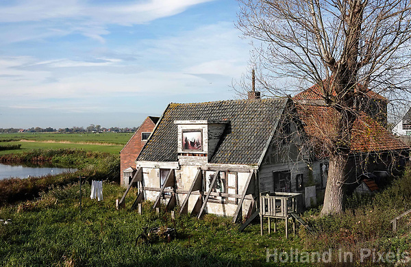 Nederland - Zaanstad - 2018 . De Fronik Buurtboerderij. Na meer dan 10 jaar onofficiële en informele buurtactiviteiten op het terrein van de Fronik boerderij werd  in augustus 2015 de Stichting Fronik Buurtboerderij opgericht. Zonder winstoogmerk, met een vrijwillig bestuur en met als doel het behoud en beheer van de Fronik boerderij. De stichting heeft zich de afgelopen jaren met succes ingezet om de boerderij voor de buurt te behouden. Het is gelukt om een manier te vinden om de ontmoeting tussen mensen, dieren, jongeren, ouderen, Zaankanters en migranten en stad en natuur, blijvend een toekomst te geven. Door het mogelijk maken van woningen voor mensen met een autistische stoornis en tegelijk een groot deel van de boerderij beschikbaar te houden voor de buurt is het mogelijk deze plek blijvend als ontmoetingsplek te bewaren.  Foto Berlinda van Dam / Hollandse Hoogte