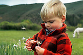USA, Wyoming, Encampment, a young boy playing with a dandelion, AbarA Ranch