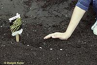 HB03-095x  Planting seeds in garden