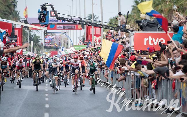 Sam Bennett (IRL/Bora-Hansgrohe) wins the bunch sprint into Alicante<br /> <br /> Stage 3: Ibi. Ciudad del Juguete to Alicante (188km)<br /> La Vuelta 2019<br /> <br /> ©kramon