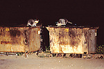 Raccoons In Trash At Night