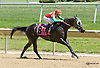 Gold Diggin Dixie winning at Delaware Park racetrack on 7/5/14