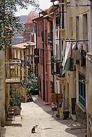 Europe/France/Languedoc-Roussillon/66/Pyrénées-Orientales/Collioure: ruelle