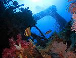 Orchid Island, Taiwan -- Blacklip butterflyfish (Klein's butterflyfish), Chaetodon kleinii, on the Ba Dai ship wreck.