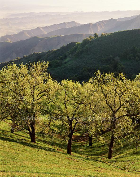 Oak Ridge Los Padres NF  CALIFORNIA