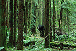 Cryptid bipedal primates, Washington