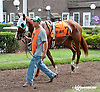 Vicky Ticky Tavie before The Forever Together Stakes at Delaware Park on 9/11/13
