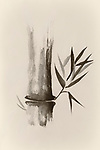 Beautiful Zen painting of bamboo stalk and leaves in sepia. Sumi-e Chinese Japanese black ink on rice paper painting fine art.