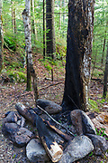 Hardwood tree that has been burned from a campfire along Walker Brook in Franconia Notch State Park of the White Mountain National Forest, New Hampshire