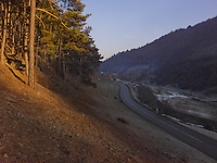 FOREST_LOCATION_90039